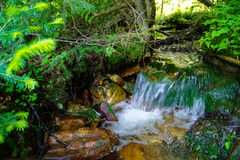 Forest mountain stream. Falling over stones Royalty Free Stock Image