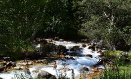 Forest and mountain stream. Nature reserve Teberda Karachayevo-Cherkessia, Russia. Photo taken on: July 27 Saturday, 2013 Stock Image