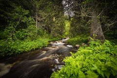 Forest mountain stream after rainy days, summer in Norway stock photos