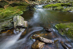 Forest Mountain Stream Rapids Royalty Free Stock Image