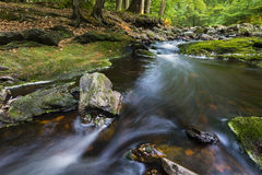 Forest Mountain Stream Rapids Royalty Free Stock Photo