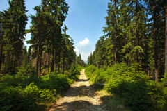 Forest mountain trail on a sunny day on sky background Stock Photography