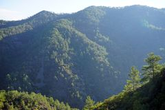 Forest in mountain. Forest in Troodos mountain in Cyprus stock photos