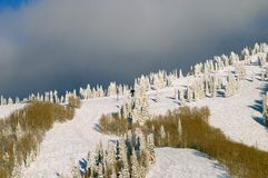 Forest on mountain in Winter Royalty Free Stock Image