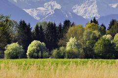 Forest and mountains. Grassland and forest at the bottom of mountains Stock Image