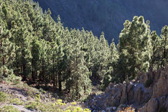 Forest in the mountains Royalty Free Stock Photography