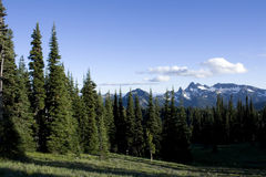 Forest and mountains Royalty Free Stock Photos