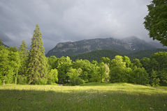 Forest and mountains in the Alps, Bavaria Royalty Free Stock Photo