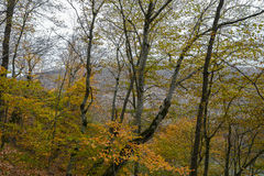 Forest in the mountains Stock Photography