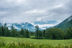 Forest mountains in the background. Trekking in the Altai Mountains Stock Photos