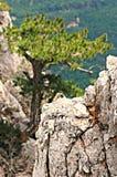 Forest and mountains of Crimea, Ai-Petri Mountain. Green trees breathe in the mountains of Crimea near Ai-Petri Royalty Free Stock Image