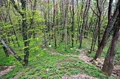 Forest and mountains of Crimea, Ai-Petri Mountain. Green trees breathe in the mountains of Crimea near Ai-Petri Stock Image