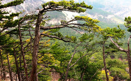 Forest and mountains of Crimea. Green trees breathe in the mountains of Crimea near Ai-Petri Stock Photo