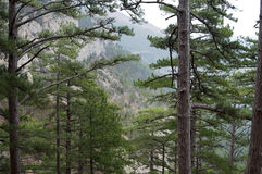Forest in the mountains. Crimea. Scenic mountain landscape in the Crimea Royalty Free Stock Images