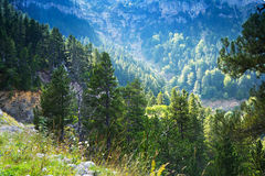Forest mountains Royalty Free Stock Images
