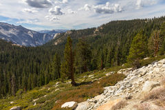 Forest and mountains landscape of Yosemite National Park, USA Stock Photography