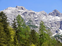 Forest and mountains in nature Stock Photos