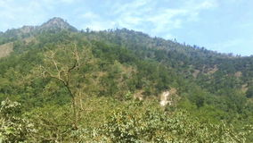 Forest and the mountains near Rishikesh at the foot of   Himalaya stock footage