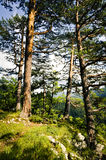 Forest in the mountains Royalty Free Stock Photos
