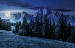 Forest in mountains with rocky peaks at night. Spruce forest on grassy hillside in mountains with rocky peaks at night in full moon light. gorgeous composite Stock Photos