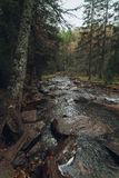 Forest mountains. In Russia, Taganai royalty free stock images