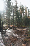Forest mountains. In Russia, Taganai royalty free stock photography