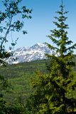Forest and Mountains in Skagway, Alaska Royalty Free Stock Photos