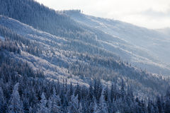 Forest in mountains on sunny morning in wintertime Royalty Free Stock Photo