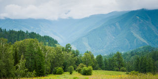 Forest in the mountains. Trekking in the Altai Mountains Royalty Free Stock Photography