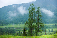 Forest in the mountains. Trekking in the Altai Mountains Stock Photography