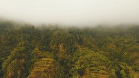 Rainforest in cloud, Bali,Indonesia. Forest in the mountains of tropical island in the clouds. Aerial view of over tropical rainforest in mountains with white stock footage