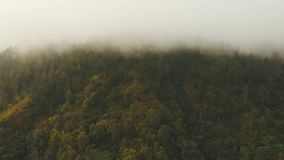 Rainforest in cloud, Bali,Indonesia. Forest in the mountains of tropical island in the clouds. Aerial view of over tropical rainforest in mountains with white stock video
