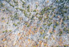 Forest in the mountains in winter. Aerial photo Royalty Free Stock Photo