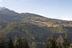 Forest on mountainside. Scenic view of forest on Dolomite mountainside Stock Photography
