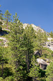 Forest on mountainside. Scenic view of forest on Sierra Nevada mountainside, California and Nevada, U.S.A stock photography