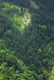 Forest on mountainside. Scenic view of forest on steep mountainside Stock Images