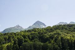 Forest and moutain. Close up royalty free stock images