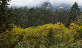 Forest moutain landscape Royalty Free Stock Photography