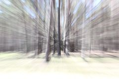 Forest is moving, trees like with action. change zoom on long exposure, lens zoom effect. Shooting landscapes at slow shutter royalty free stock photography