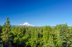 Forest and Mt. Hood Stock Photos