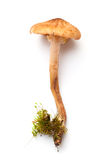 Forest mushroom Royalty Free Stock Photography