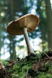 Forest mushroom Stock Photos