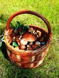 Forest Mushroom Basket imagen de archivo libre de regalías