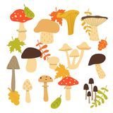 Forest mushroom collection. Set of items isolated on white background. Vector illustration vector illustration