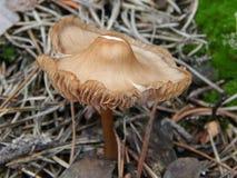 Forest mushroom hiding in the grass. Kamensk-Shakhtinsky, Russia, November 20, 2013 Stock Photo
