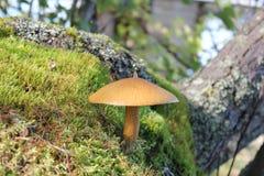 Forest mushroom Stock Image