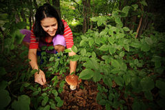 Forest Mushroom Picking. Young girl mushroom picking in a beautifull forest stock photos