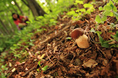 Forest Mushroom Picking Royalty Free Stock Image