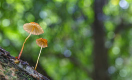 Forest mushroom Royalty Free Stock Images