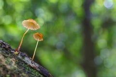 Forest mushroom Royalty Free Stock Image